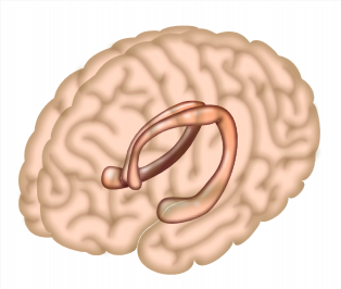 How does the brain link events to form a memory? Study reveals unexpected mental processes