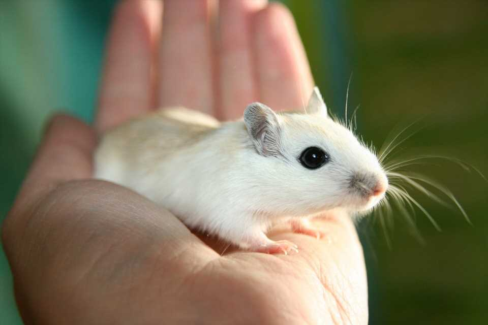 Scientists identify compound that stimulates muscle cells in mice