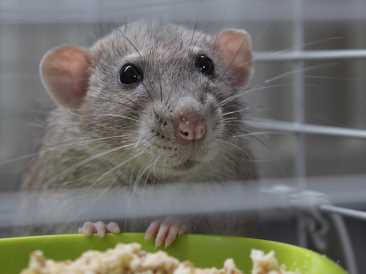 Mice with diabetes successfully treated with EMFs