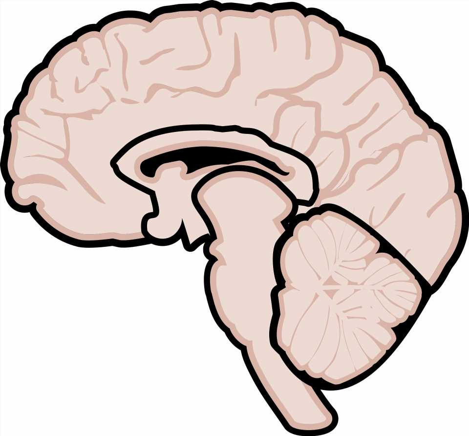 Medication may improve thinking skills in advanced multiple sclerosis: study