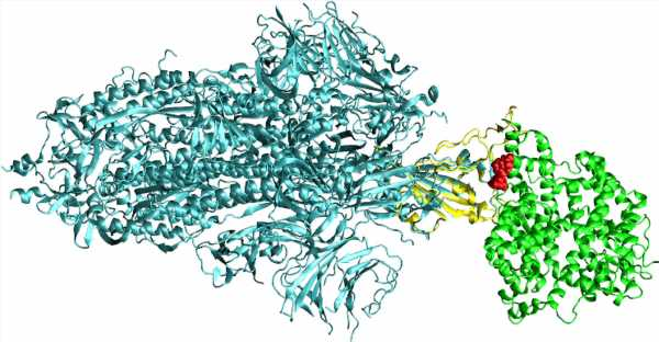 Study identifies new potential treatments for COVID-19