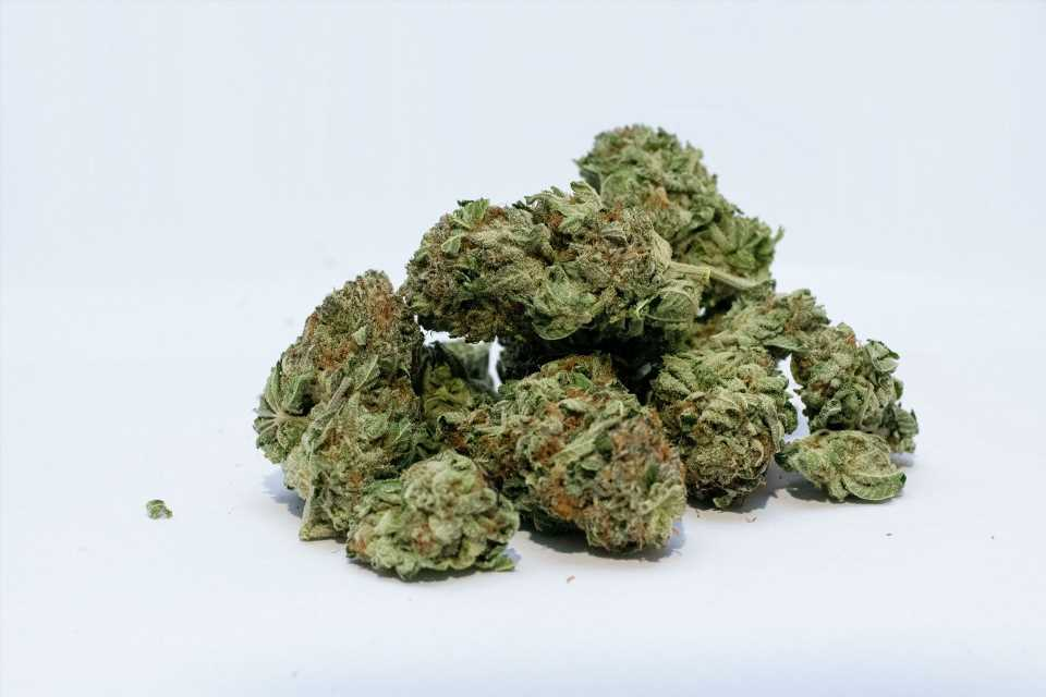 Heritable traits that appear in teen years raise risk for adult cannabis use