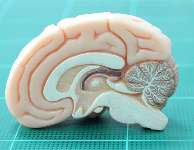 Researchers develop tools to detect chemical signals between the brain and immune system