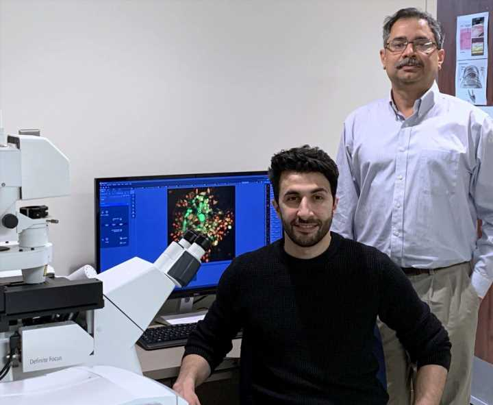 Researchers discover hidden link between cellular defense systems
