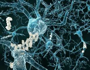 Inhibition of Meprin Β enzyme can trigger the development of Alzheimer's disease, cancer