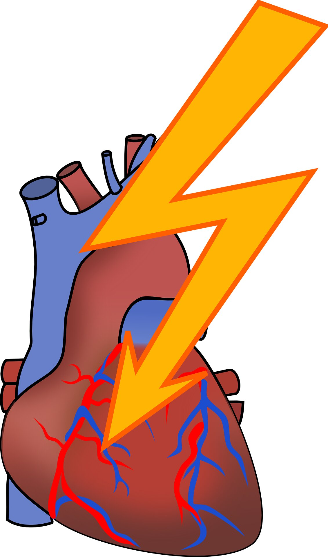 Heart cells cozy up to prevent deadly arrhythmias