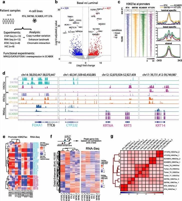 3D genome structure influences cancer